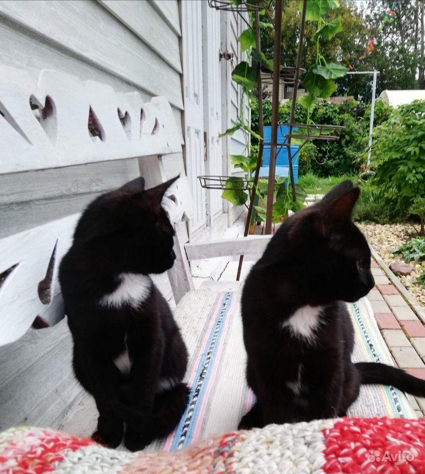 Отдам в хорошие руки двух котиков, возраст 4 месяц