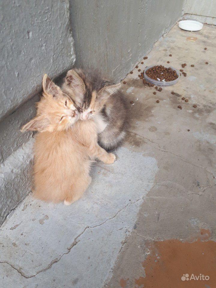 Котята в добрые и заботливые руки