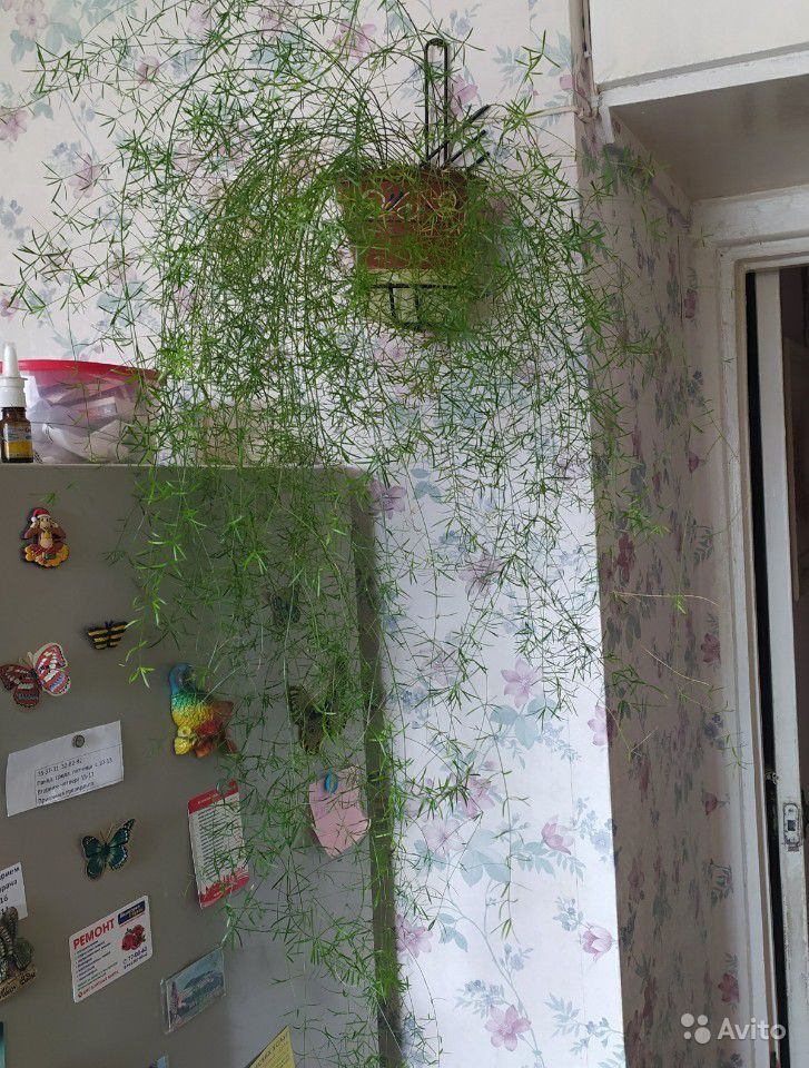 Комнатные растения купить на Зозу.ру - фотография № 8
