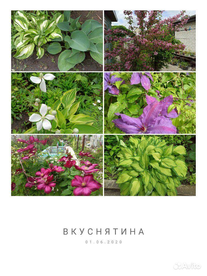 Саженцы купить на Зозу.ру - фотография № 10