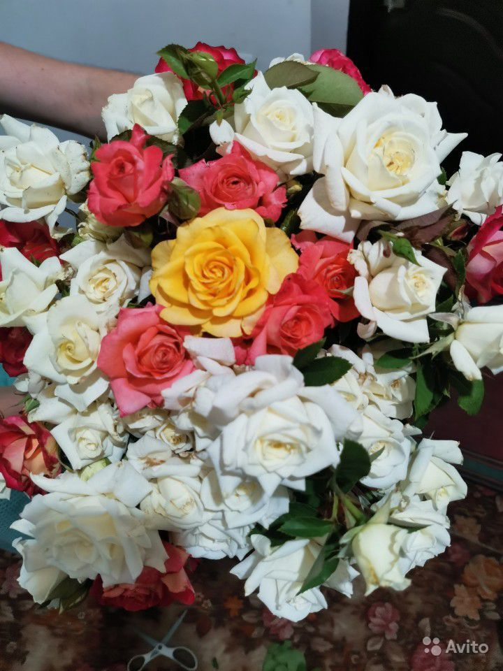 Розы на срезку. Букеты купить на Зозу.ру - фотография № 5