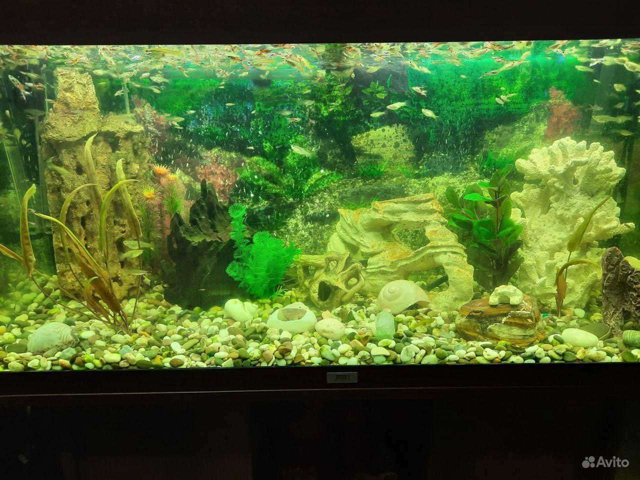 Аквариум juwel 180 литров с рыбками купить на Зозу.ру - фотография № 2