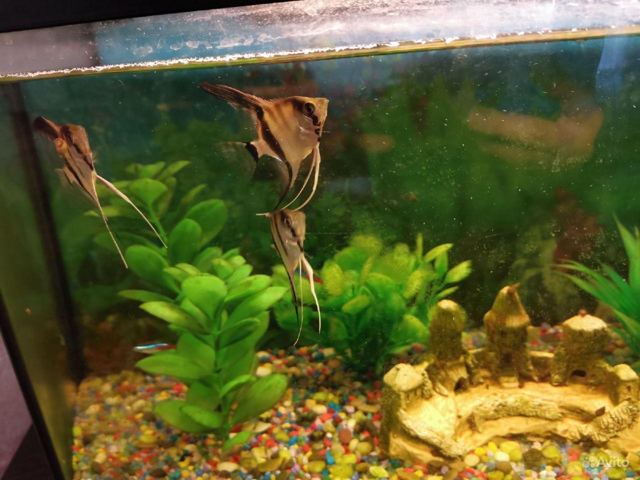 Продам аквариум купить на Зозу.ру - фотография № 2