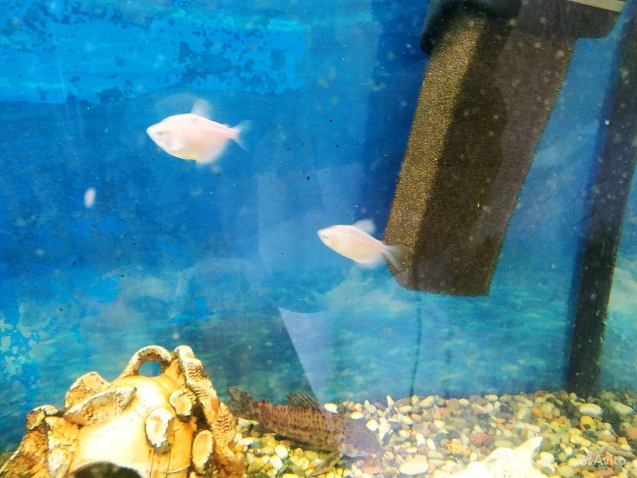 Украшение для аквариума купить на Зозу.ру - фотография № 6