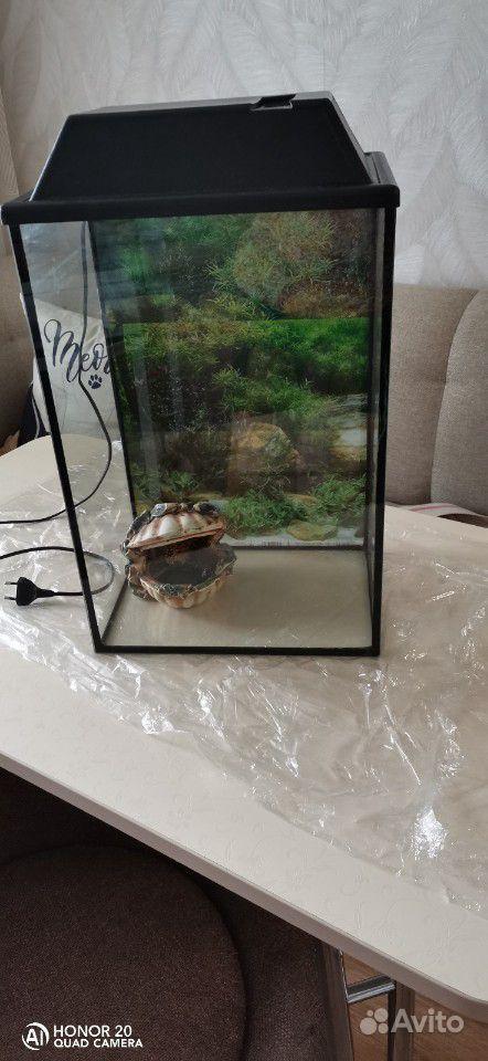 Аквариум 30литров 1500 без торга, грунт, и декор в купить на Зозу.ру - фотография № 2