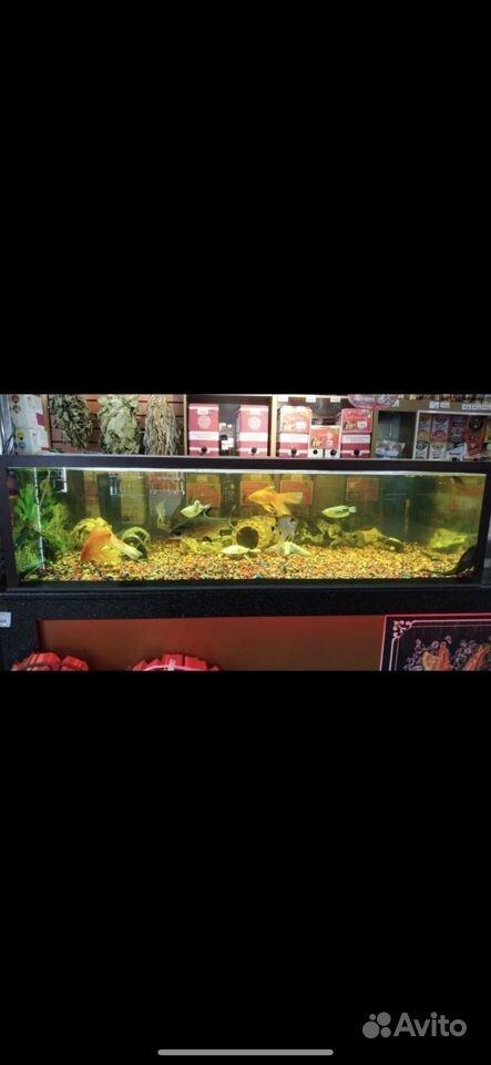 Готовый аквариум купить на Зозу.ру - фотография № 2