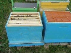 Пчелосемьи,пчелопакеты,улья, пчелы,пчеломатки
