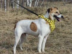 Собака Розочка для семьи и дома в дар