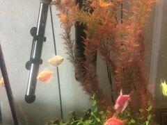Аквариум и рыбы