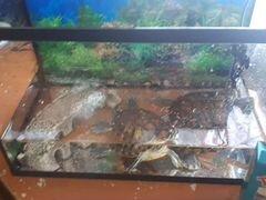 Красноухих черепахи