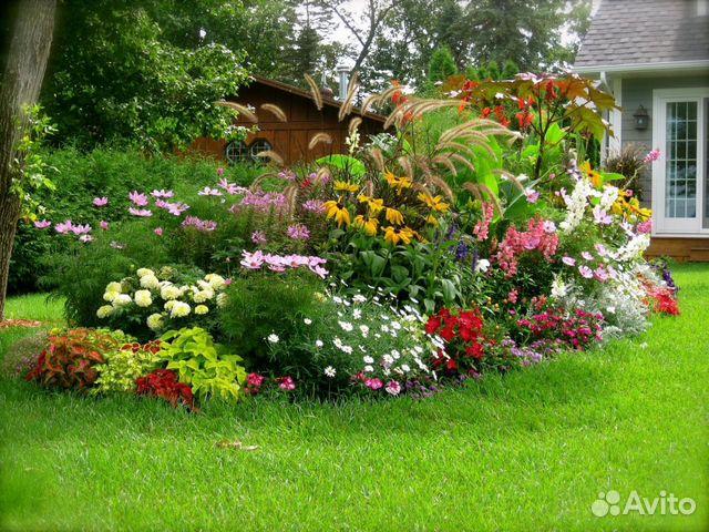 Многолетние цветы для кировской области
