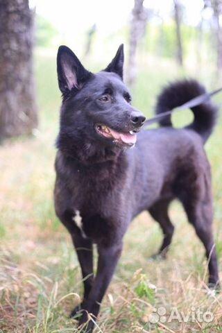 Чёрная лисичка Ночь в дар в добрые руки купить на Зозу.ру - фотография № 3