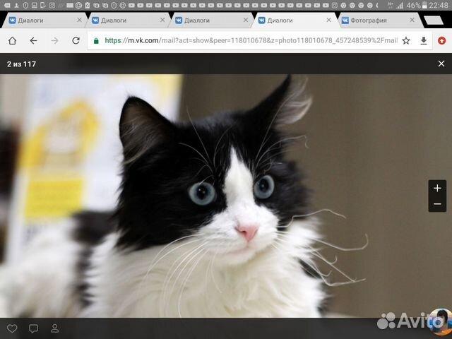 Котик с небесно голубыми глазами ищет дом