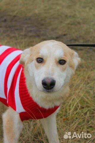 Милашка Собака подросток Эви в дар купить на Зозу.ру - фотография № 1