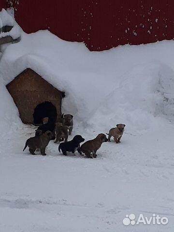 10 щенков с улицы ищут дом купить в Новосибирской области ... | 480x360