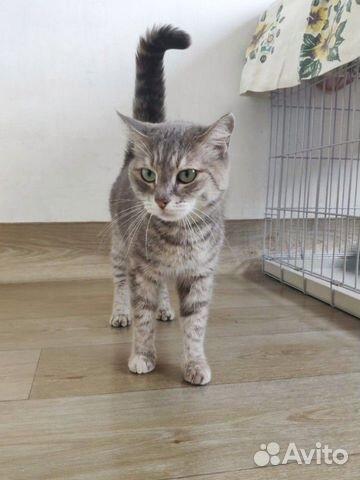 Кошка Плюша, 1 год  купить 3