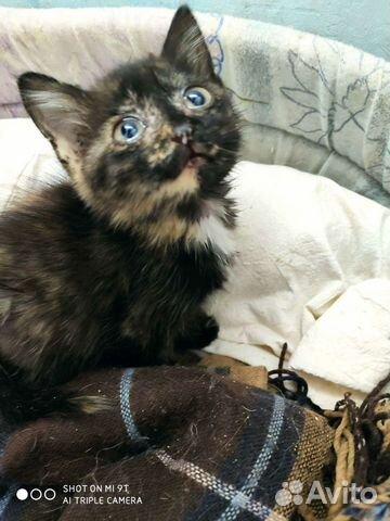 Kitten girl  buy 4
