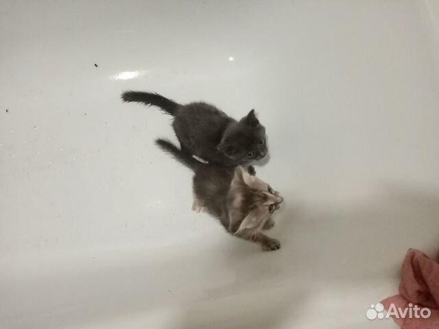 Котята в добрые руки  89000940784 купить 2