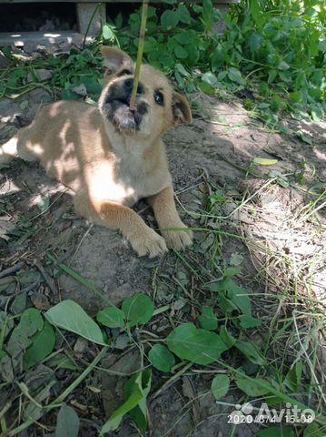 Собака  89156359877 купить 1