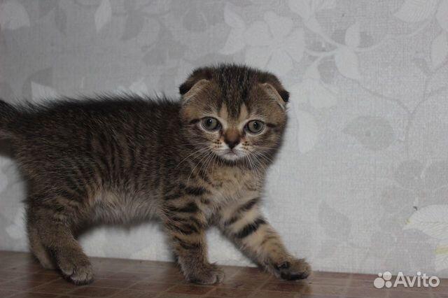 Котята  89050840059 купить 6