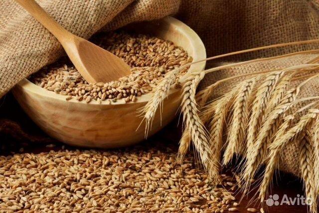 Пшеница  89782699577 купить 2