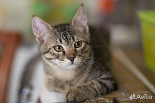 Котенок в добрые руки  89155387202 купить 1