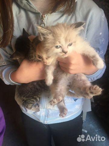 Кошка  89515727172 купить 1