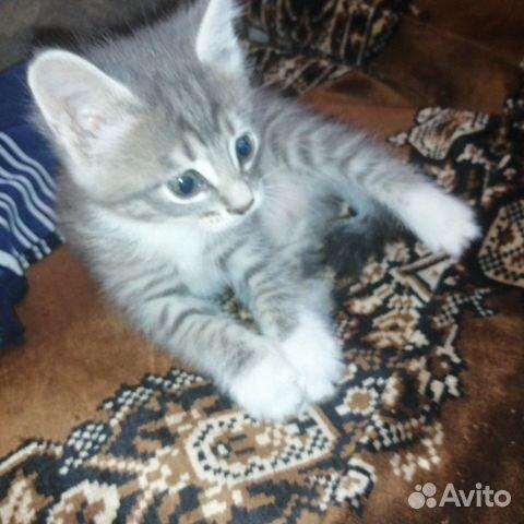 Кошка  89148760418 купить 3