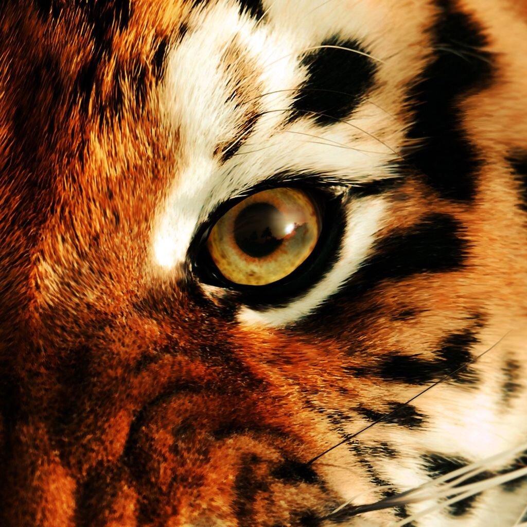 helm tigers eye repeat - HD2640×1848