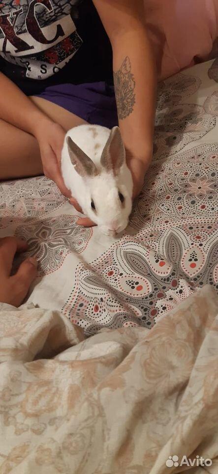 Декоративный кролик  89188091795 купить 1