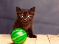Котенок девочка 1 мес ищет любящих хозяев