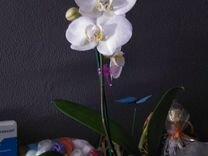 Орхидеи набор