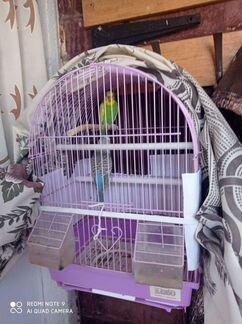 2 попугая с клеткой - в Марксе - Объявления в Марксе