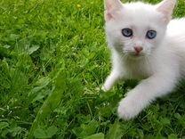 Молодая кошка,в добрые руки