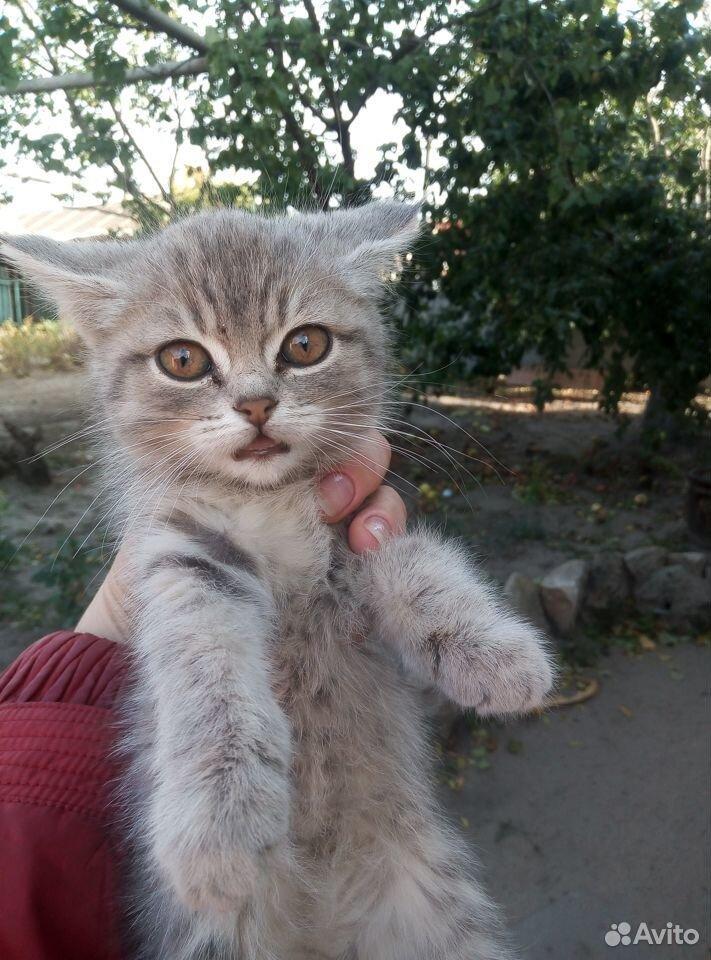 Кошка  89370906262 купить 2