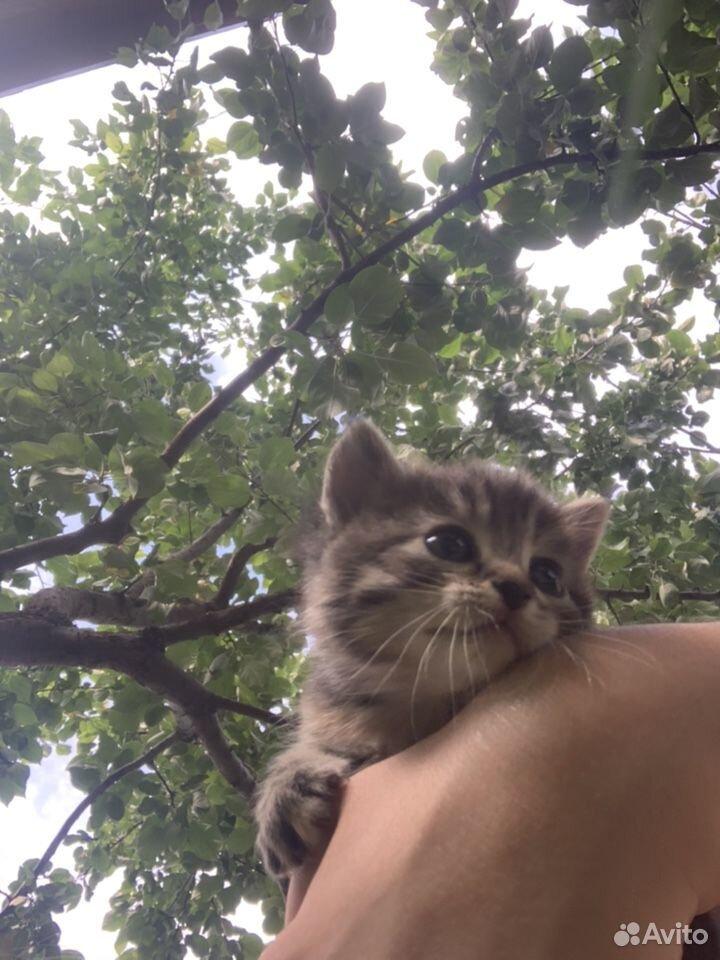 Кошка  89225313101 купить 1
