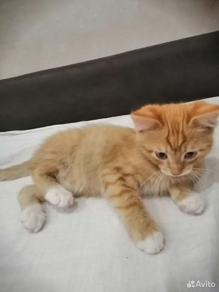 Кошечка в добрые руки  89918107751 купить 3