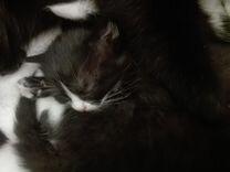 Котятки ищут дом