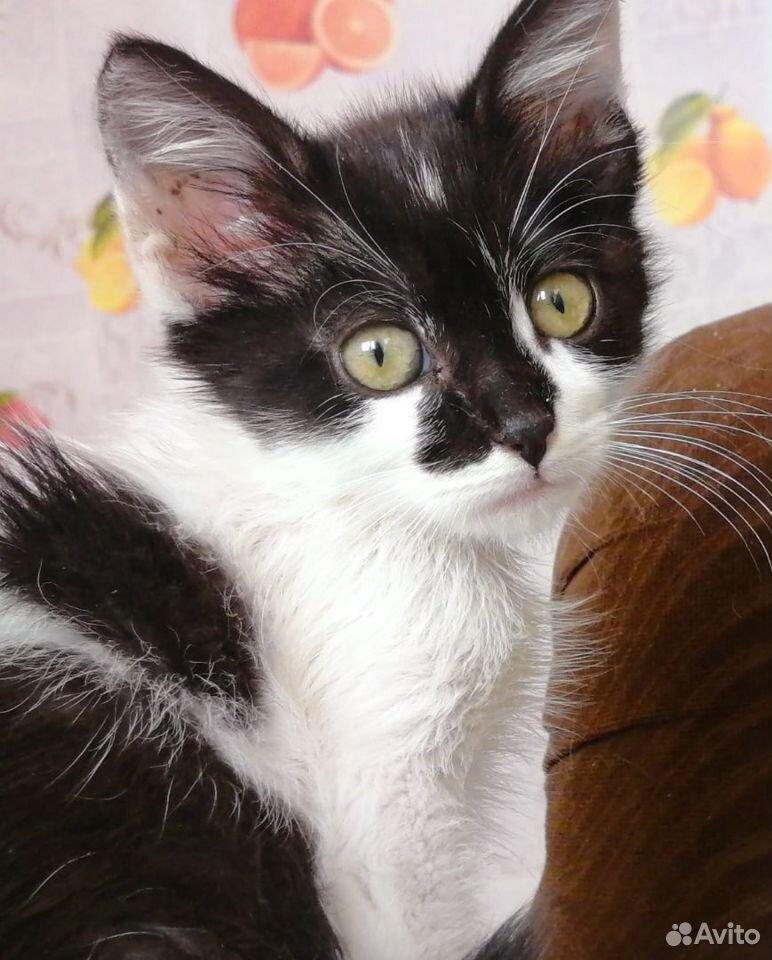 Котята в самые лучшие ручки  89520874065 купить 2