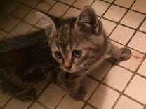 Котёнок в дар ищет свой дом