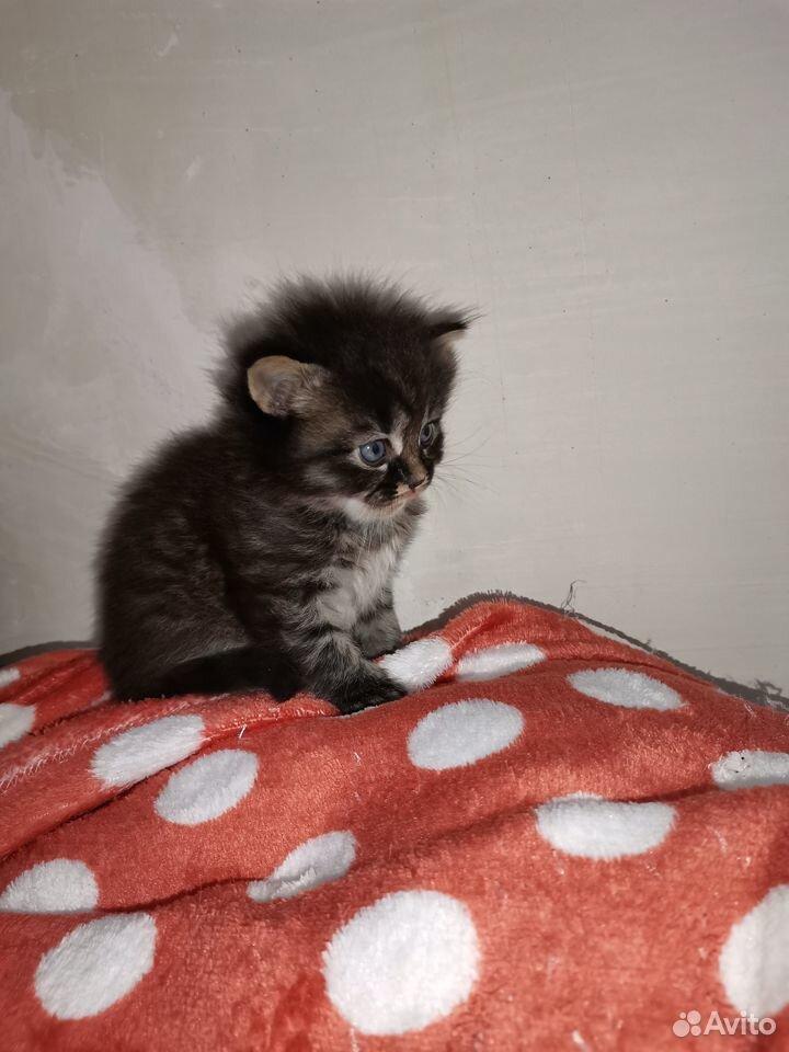 Отдам котят  89667436788 купить 3