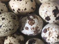 Яйца перепелиные.Жилгородок. Цена за десяток